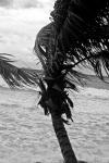 around_PaP_and_Jacmel-11