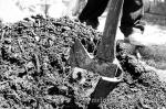 moringa_art_planting-22-2