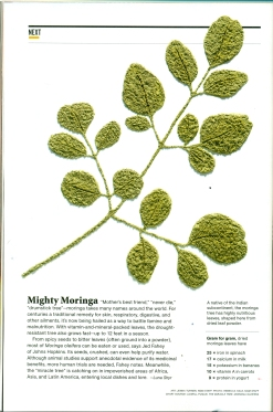 national geographic moringa0001